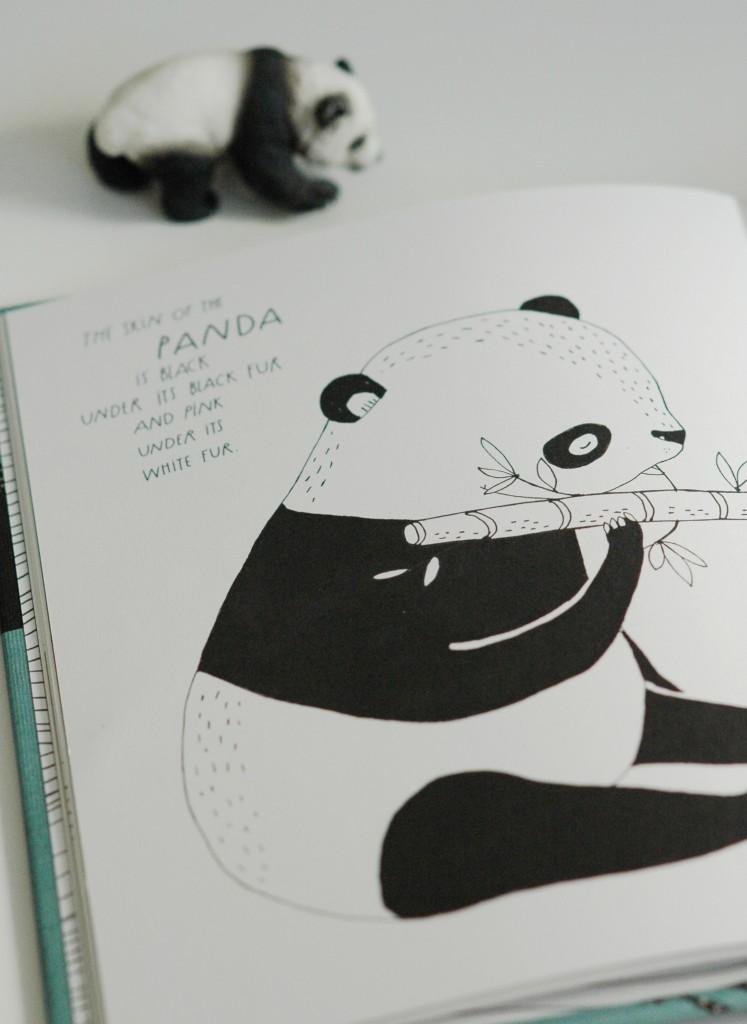 Panda - maja sasftrom cropped